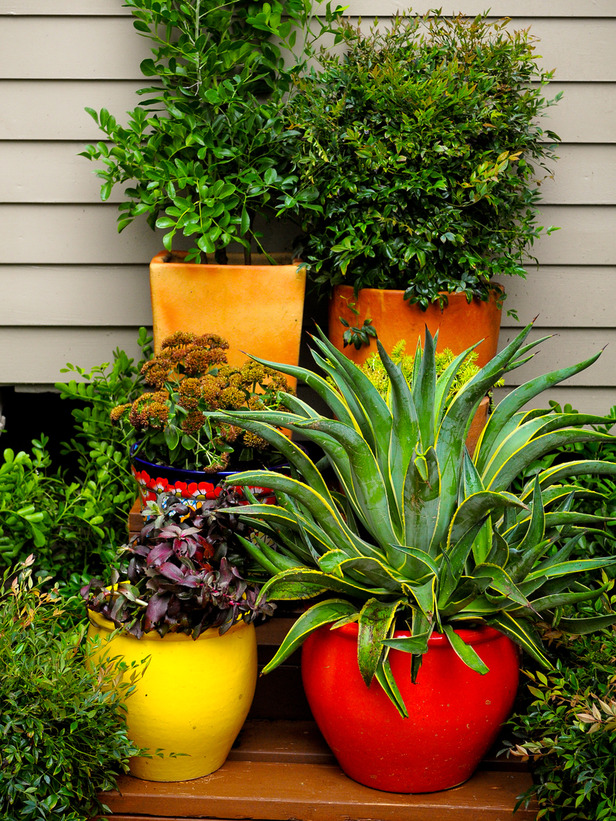 horjd303_container-gardens_s3x4_lg