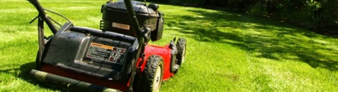 Grass Clippings: Bag or Mulch